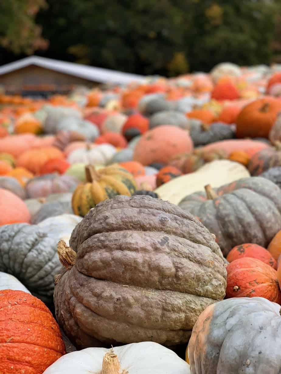 pumpkin lassi